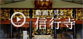 動画で見る信行寺